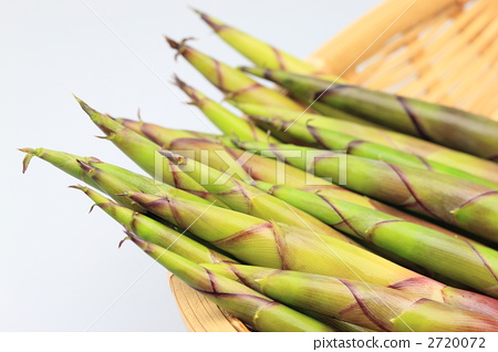 Root bending bamboo 2720072
