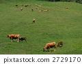 Cattle grazing 2729170