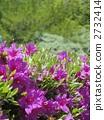 神社的植物 2732414