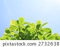 새잎, 백목련, 신록 2732638