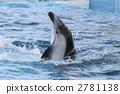 海豚 2781138
