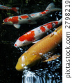 Carp of Ise Shrine 2798219