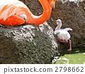 王子爬上動物園的火烈鳥的小雞 2798662