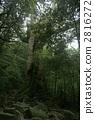 일곱 개의 삼나무 2816272