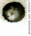 rag doll, cat, animal 2835907