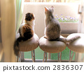 animal, animals, cat 2836307