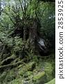 원령 공주의 숲 2853925