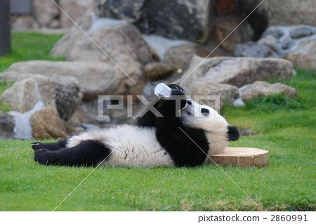 젖병으로 우유를 飲む子 팬더 2860991