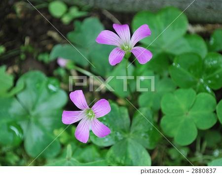 꽃말은 '빛나는 마음 · 기쁨 · 마음의 빛' 2880837