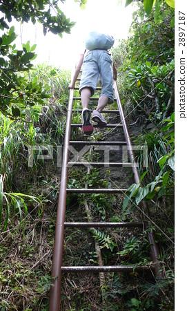 Walk through the Jungle Trail of Her Hometown of World Heritage Ogasawara Haha 2897187