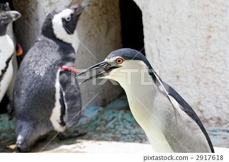 펭귄 기분 우에노 동물원의 해오라기 2917618