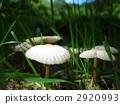 這是我們在雨中發現的蘑菇。 2920993