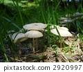 這是我們在雨中發現的蘑菇。 2920997