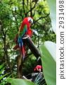 Beni Macawonko 2931498