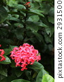 Santanka红色花 2931500