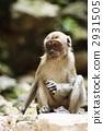 猴子 动物 陆生动物 2931505