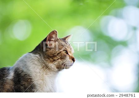 貓在陰影中 2948761
