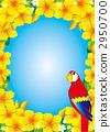 鳳頭鸚鵡 鸚鵡 長尾鸚鵡 2950700