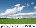 Prairie 2950867
