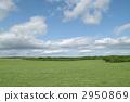 Prairie 2950869
