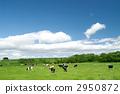 grazing 2950872