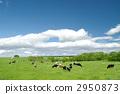 grazing 2950873