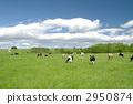 grazing 2950874