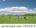 grazing 2950875