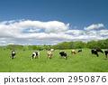 grazing 2950876