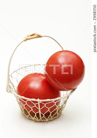 모모 타로 토마토 2998350