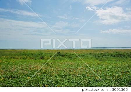 Primary flower garden of the Noshi peninsula, Large community of Ezokanzou 3001366
