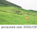 방목, 언덕, 작은 산 3056238