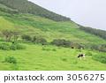 방목, 언덕, 작은 산 3056275