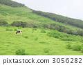 등, 목초, 방목 3056282