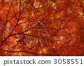 紅色的樹 3058551