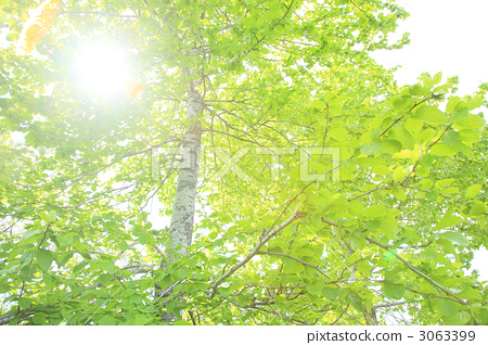 Fresh green trees 3063399