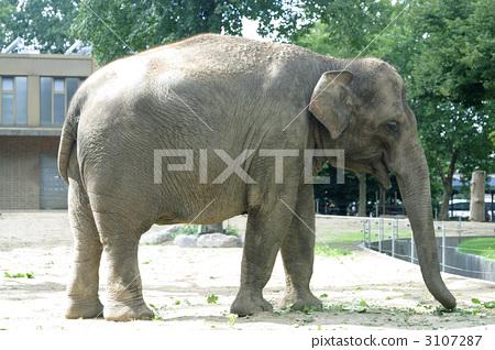 大象全身 3107287