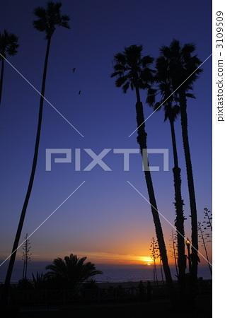 Evening view of Santa Monica 3109509