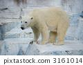 Polar bears 3161014