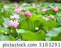 Renka Tokyo · Ueno · Shinobazu Pond 3163291