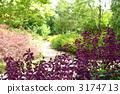 August Salvia / Labiaceae 26 3174713