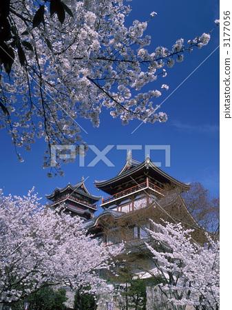 Cherry blossoms of Fushimi castle 3177056