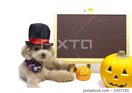 Halloween 3207530
