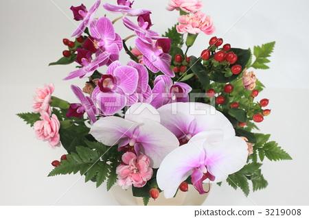 phalaenopsis orchid, floral arrangement, flower arrangement 3219008