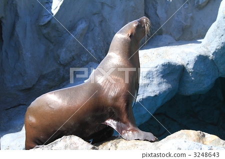 sea animals, harmful animals, blackish brown 3248643