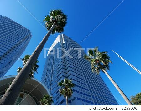 가로수, 오피스 빌딩, 오피스 건물 3255936