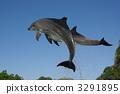 跳跃的两只手海豚 3291895