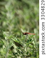 Red dragonfly 3304829