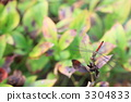 Red dragonfly 3304833