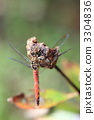 Red dragonfly 3304836